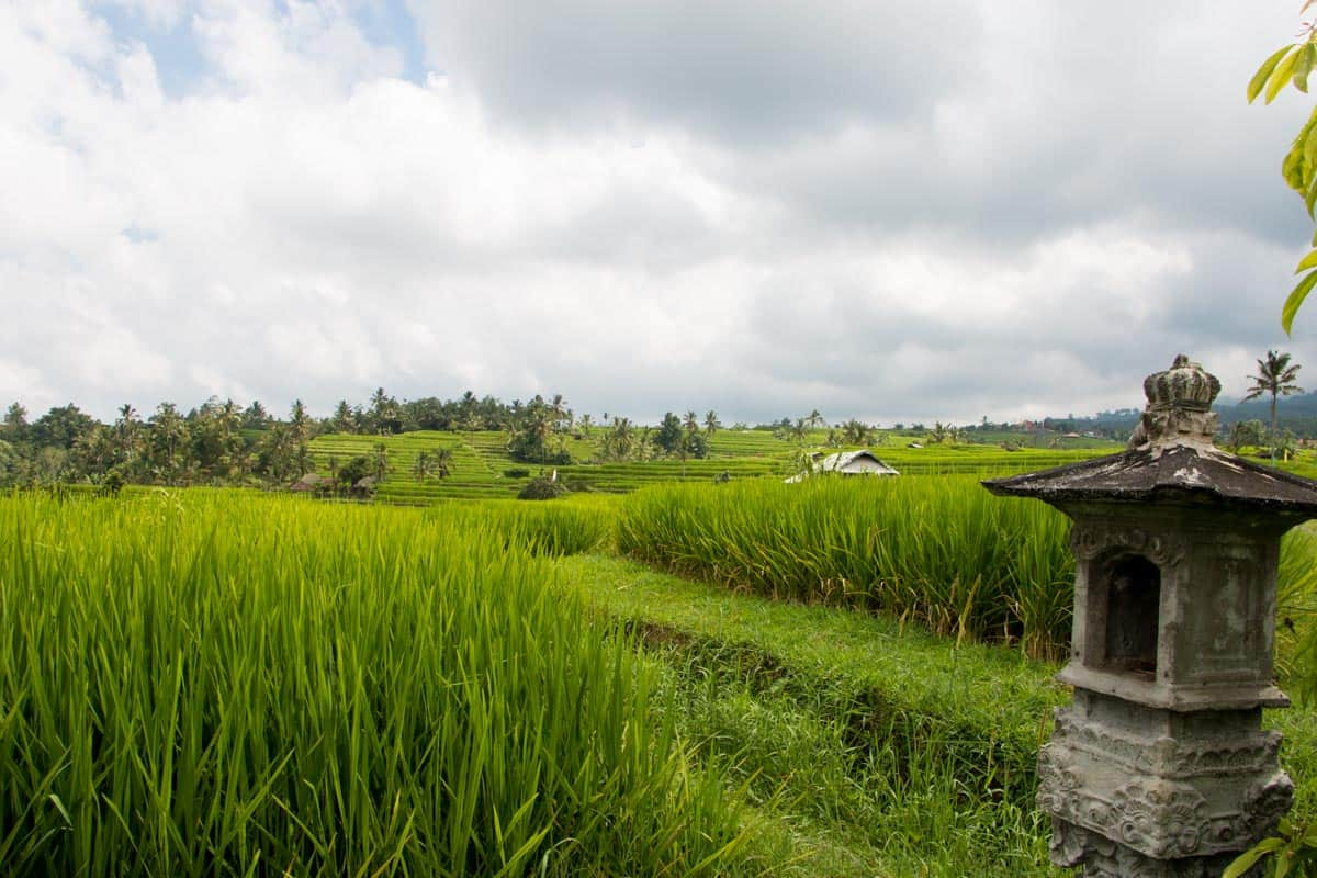 the ricefields around bali - first view of a town known for its nomad life